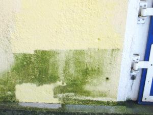 Uklanjanje algi sa fasada, primjer 1